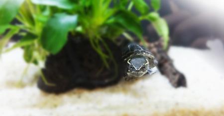 エントランスの亀水槽