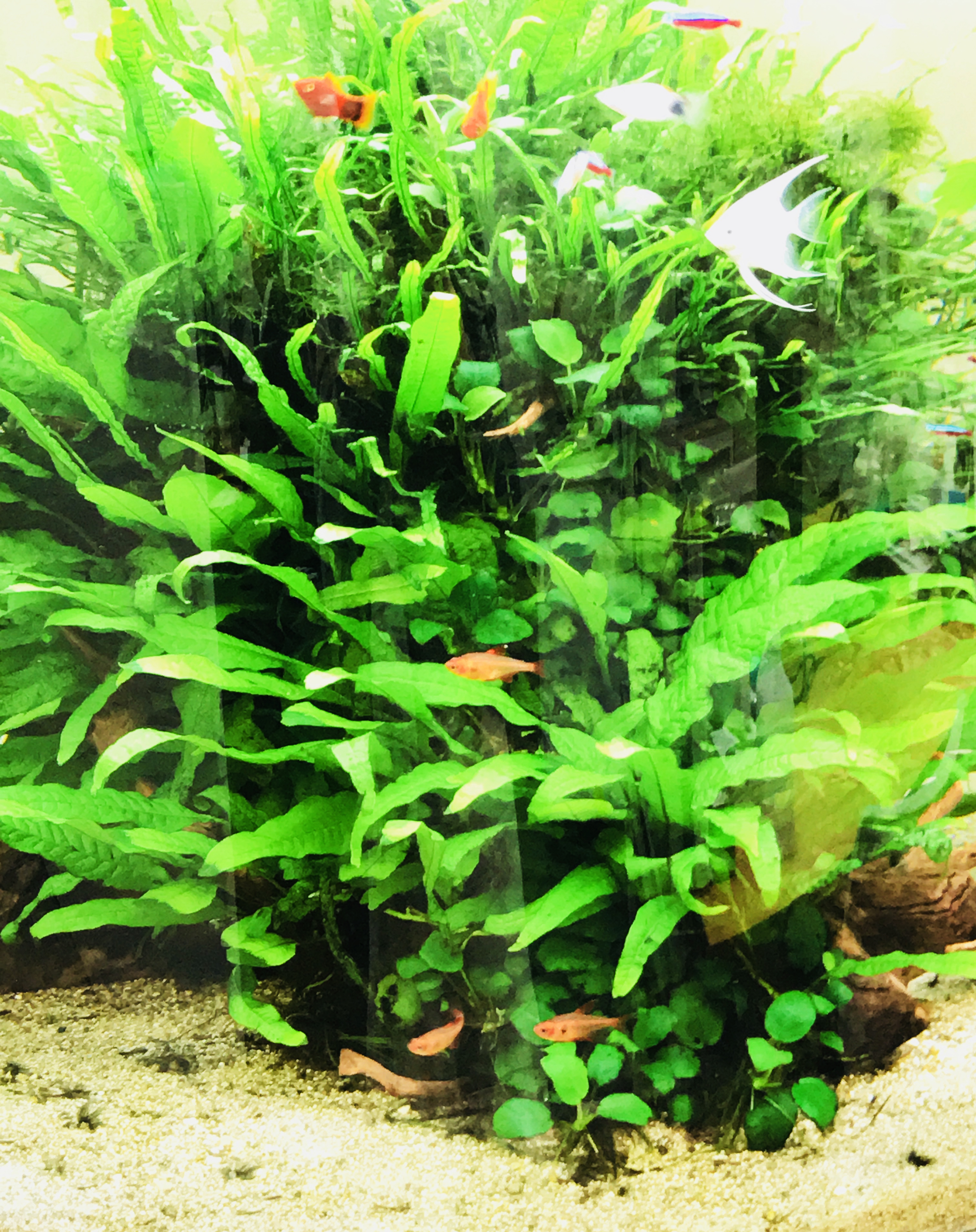 優雅に泳ぐ熱帯魚
